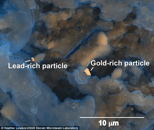 26ee2ca400000578 0 image a 20 1427144620566 - Cientificos quieren extraer oro de excrementos humanos