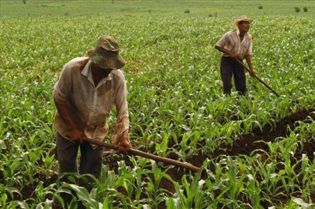 Los agricultores de el salvador rechazan los transg nicos for Sembrar maiz y frijol juntos