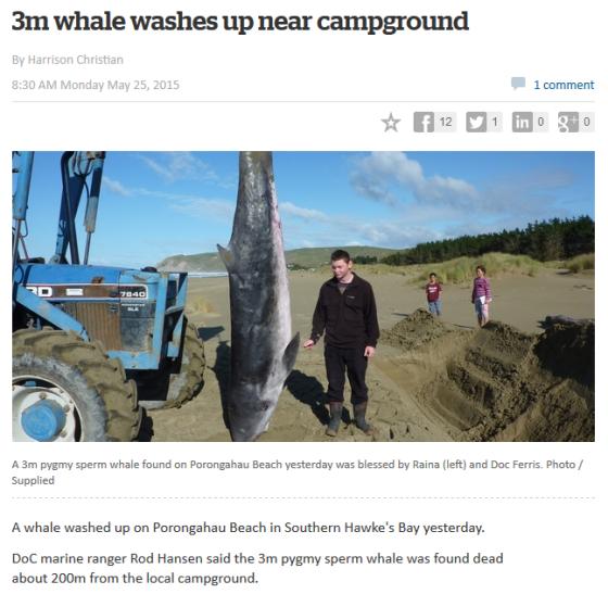 ballena nueva zelanda
