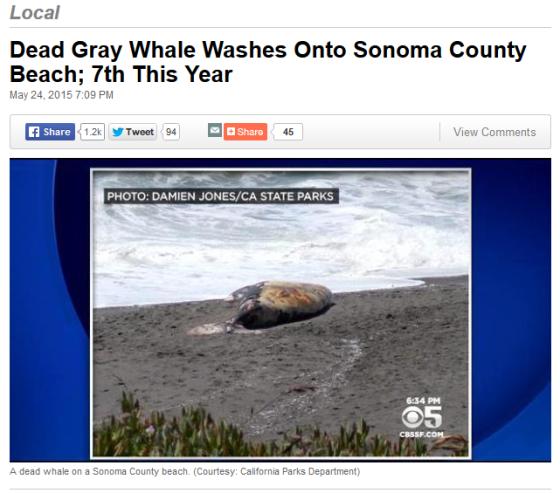 captura ballena gris sonoma