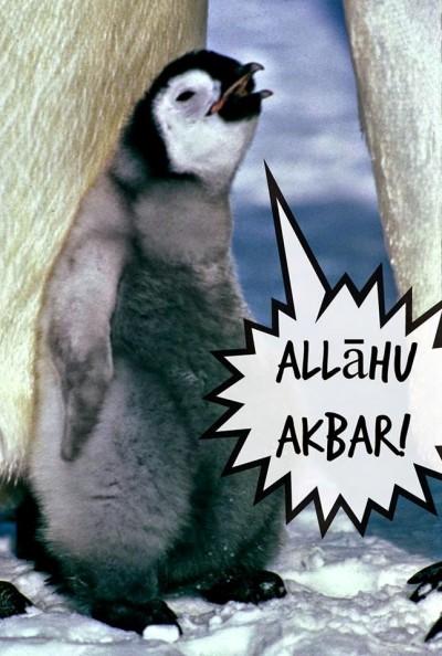 Exclusiva: peligroso pingüino convertido al Islam dispuesto a atentar contra Occidente
