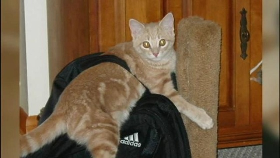 North-Catasauqua-man-says-lost-cat-was-shot-by-police