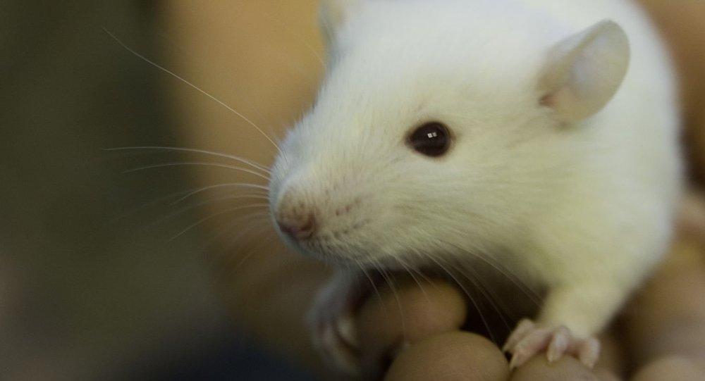 cientficos japoneses mediante ipads mostraron a ratones de laboratorio tres tipos de pelculas en la primera los ratones se olfatean unos a otros