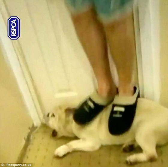 32AAB88A00000578-3515263-Animal_cruelty_Two_brothers_filmed_themselves_abusing_their_dog_-m-70_1459328660592