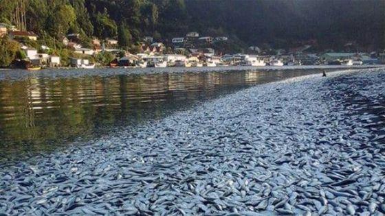 El gobierno de Chile la declaró zona de riesgo sanitario inminente.