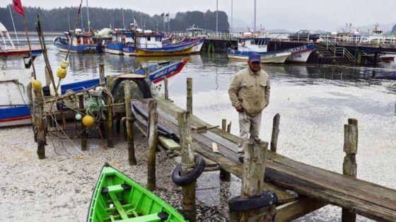 Las autoridades dijeron que hay unas 1.200 toneladas de sardinas muertas en la desembocadura del río Queule, al sur de Chile.