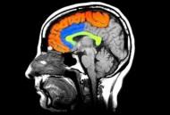 ESTUDIO CIENTÍFICO HALLA POSIBLE VÍNCULO ENTRE ENFERMEDADES MENTALES E INFECCIÓN PORHONGOS