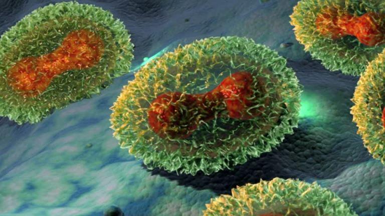 virus de viruela